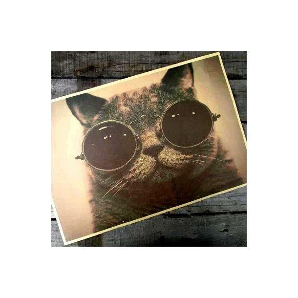 Den perfekte poster til katte elskeren